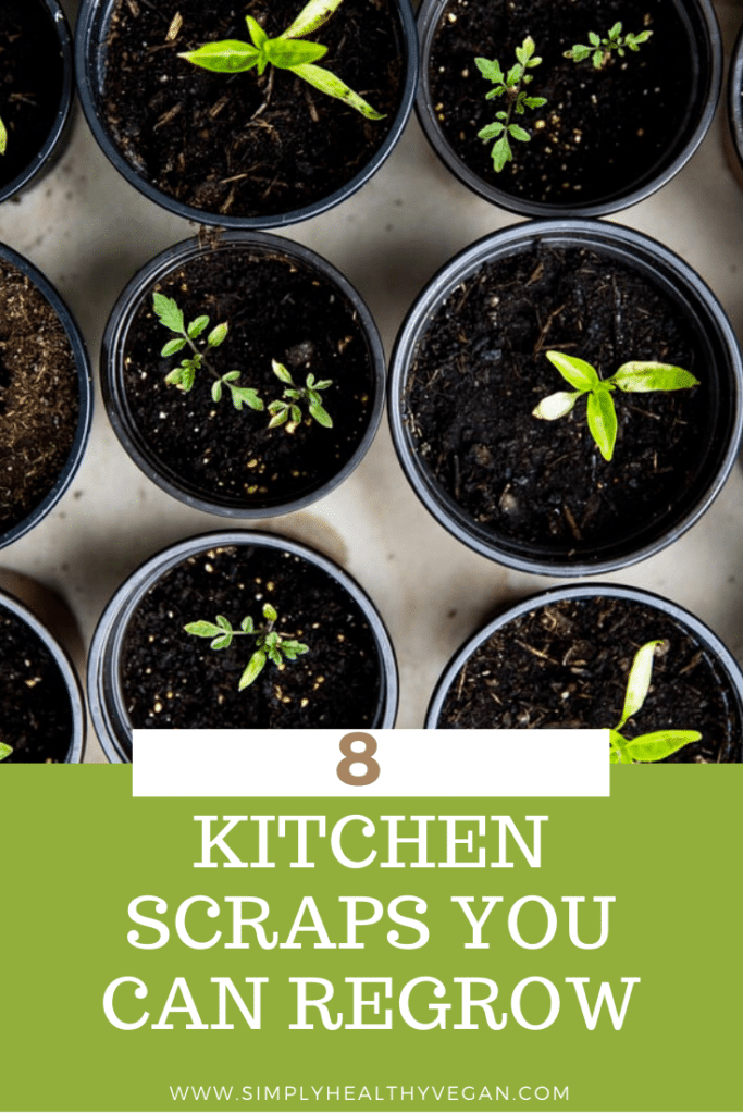11 Foods You Can Regrow from Scraps | Basil seedlings, Regrow green onions, Growing basil
